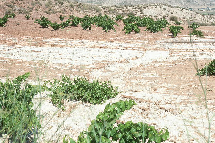 WAD | World Atlas of Desertification